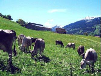Auf Voranmeldung: Stallvisite in Buchen