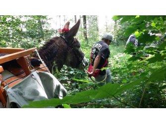 Randonnée avec âne de bât
